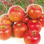 りんご サンふじ 2.5kg1箱 青森県産 食品 グルメ 果物