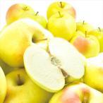 りんご 青森産 とき 訳あり(10kg)林檎 ご家庭用 数量限定 黄金りんご トキ 希少品種 シャキシャキ 国華園