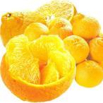 みかん 和歌山産 ご家庭用 デコみかん(5kg)無選別 種なし 不知火オレンジ しらぬい 柑橘 かんきつ フルーツ 国華園