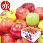 食品 青森産 お買得 おまかせ赤りんご 10kg 1組 りんご 国華園