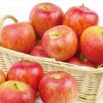 りんご ご家庭用 北斗 5kg1箱 青森県産 林檎 食品 果物 国華園