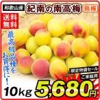 生梅 和歌山産 紀州南高梅 【熟梅】 5kg1箱 送料無料 うめ 梅 冷蔵便 食品