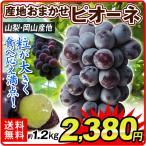 ぶどう 産地おまかせ ピオーネ(約1.2kg)約300g×4パック ご家庭用 葡萄 グレープ フルーツ 国華園