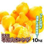 みかん 熊本産 不知火オレンジ(10kg)ご家庭用 しらぬい デコ 蜜柑 柑橘 フルーツ 果物 食品 国華園
