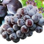 ぶどう 山形産 ピオーネ 約3kg  ご家庭用 葡萄 ブドウ 果物 国華園
