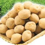 食品 北海道産 キタアカリ 20kg じゃがいも 1組 野菜 国華園