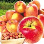 りんご 青森産 葉とらずふじ(20kg)50〜90玉 木箱 無選別 ご家庭用 林檎 フルーツ 果物 国華園