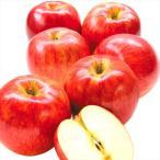 りんご 青森産 ご家庭用 サンつがる(5kg)13〜25玉 早生品種 林檎 果物 フルーツ 国華園