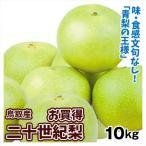 梨 鳥取産 お買得 二十世紀梨(10kg)16〜36玉 青梨の王様 にじゅっせいき なし 和梨 果物 フルーツ 国華園