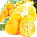 みかん 熊本産 ご家庭用 不知火オレンジ 5kg1箱 蜜柑 柑橘 フルーツ 果物 食品 国華園