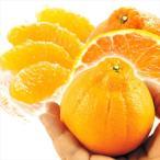 みかん 熊本産 ちびデコ 4kg1箱 蜜柑 柑橘 フルーツ 果物 食品 国華園