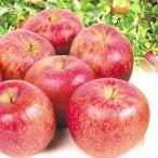りんご 青森産 ギフト用 大玉サンふじ(10kg)24〜32玉 大玉 贈答用に 林檎 フルーツ 国華園