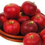 りんご 青森産 北紅 10kg1箱 フルーツ 果物 林檎 国華園