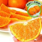 みかん 和歌山産 ご家庭用 せとか 5kg1箱 フルーツ 果物 柑橘 国華園