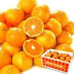 みかん 愛媛産 八幡浜みかん 10kg1組(5kg×2箱) フルーツ 果物 柑橘 国華園