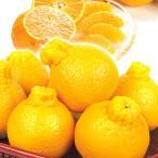 みかん 和歌山産 有田のデコ 5kg1箱 フルーツ 果物 柑橘 国華園
