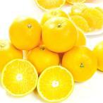 みかん 和歌山産 ご家庭用 はっさく 5kg1箱 フルーツ 果物 柑橘 国華園