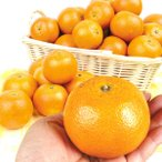みかん 鹿児島産 タンカン 5kg1箱 フルーツ 果物 柑橘 国華園
