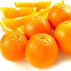 みかん 和歌山産 ネーブルオレンジ 10kg1組 フルーツ 果物 柑橘 国華園