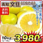 みかん 大特価 高知産 文旦 (10kg) L〜4L 徳用 ご家庭用 ぶんたん 土佐 柑橘 食品 国華園