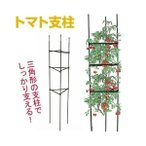 家庭菜園,トンネル栽培,トマト,螺旋,らせん,植物支え,トレリス