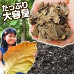 腐葉土  圧縮チーク葉 400L(腐葉土用) 1袋