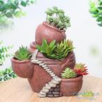 Yahoo!花と緑 国華園鉢 植木鉢 ポリ製 多肉植物 寄せ植え かわいい プチオアシス・ポットの森 大 1個 女性 プレゼント