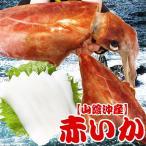 赤いか(ソデイカ) 獲れたて新鮮 お刺身(冷凍便)イカ 山陰沖産 1杯5kg アカイカ 赤イカ 送料無料