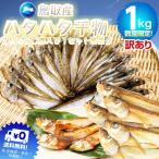 ハタハタ一夜干し 1kg (500g×2)訳あり 干物 鳥取日本海産 鰰 はたはた(冷凍便) 2セットご購入で1セット増量。