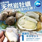 天然岩牡蠣(活) 1kg 小サイズ(150g-250g・4〜6個) 1kgセット 2セット以上ご購入で1セットプレゼント 牡蠣  送料無料