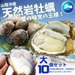 天然岩牡蠣 (活) 牡蠣 300g-400g前後 10個セット 鳥取産 岩牡蠣 カキ 刺身用 (岩ガキ/岩がき) 送料無料