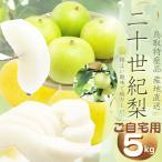 鳥取県産 二十世紀梨 (青秀優品)ご自宅用 5kg詰 梨 (L-3L 12-18個)  2箱以上お買い上げでもう1箱分5kgプレゼント  ご自宅用 梨 送料無料