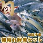 山陰沖産 鮮魚セット 贅沢 旬の朝獲れ 魚介類 お刺身 産地直送 送料無料