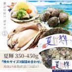 天然岩牡蠣 (活)夏輝牡蠣 350g-450g前後 3個セットブランド 夏輝牡蠣 鳥取産 カキ 刺身用 送料無料(岩ガキ/岩がき)