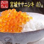 新米 米 お米 20kg 宮城県産 ササニシキ 28年産 送料無料