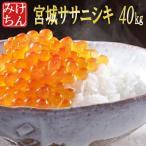 ■新米■ 米 お米 20kg 宮城県産 ササニシキ 29年産 送料無料