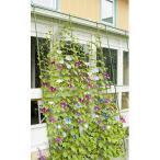 緑のカーテン 3m 伸縮ワイド1800