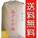【28年産】玄米 30kg 環境こだわり米 滋賀 みずかがみ