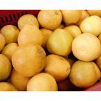 柑橘类 - 河内晩柑(美生柑) 家庭用 大玉 (10kg)