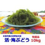 海ぶどう 沖縄 10kg 特選品 活海ぶどう 宜野座村産