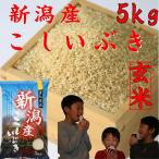 玄米5kg  お米 29年産 新潟産こしいぶき(玄米) 美味しいお米 5kg 5キロ