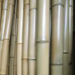 【直材】あぶり晒竹(晒竹)直径3〜3.9cm 長さ2m 1本