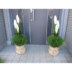 開運門松 天然の国産真竹 正月飾り 迎春 90cm 1対
