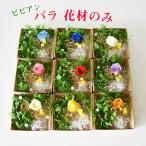ハーバリウム 花材のみ バラ ビビアン あじさい かすみ草 プリザーブドフラワーキット hk158