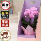胡蝶蘭 ギフト  テーブルBOX入り 3号鉢 2本立 ピンク/全国送料無料 花のプレゼント 生花 鉢植え 開店祝いに 父の日 敬老の日 おじいちゃん おばあちゃん