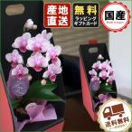 胡蝶蘭 ギフト  2WAYテーブルボックス入り 1本立 ピンク/全国送料無料 花のプレゼント 生花 鉢植え 開店祝いに 父の日 敬老の日 おじいちゃん おばあちゃん