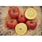 青森りんご 蜜たっぷり!! 【特選グレード】 こみつ こぶりの11個(化粧箱)※11月下旬よりのお届けとなります。