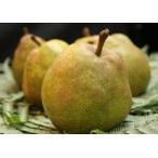 芳醇な香りと甘さ 秋葉源勇作『山形産ラフランス』6個(化粧箱入) 高級果実ワダがお届けします。
