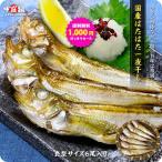 送料無料1,000円ぽっきりお試しセール!日本海のハタハタ一夜干し中型サイズ×6尾入り はたはた ハタハタ