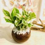 ポトスエンジョイ 土を使わない空気浄化プランツ ハイドロカルチャー 観葉植物 インテリア